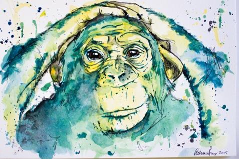 Chimp-0298